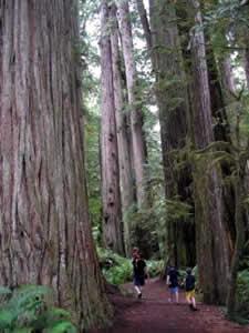 janz_walk_in_woods.jpg