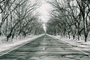 pryde_trees.jpg