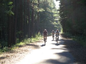 wood_biking.jpg