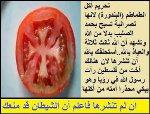 islam-tomato150.jpg